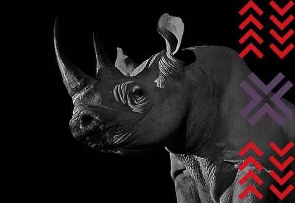 Tusk Rhino Trail | London | 2018